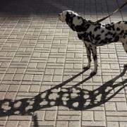 unthink_dog_320_216_c1